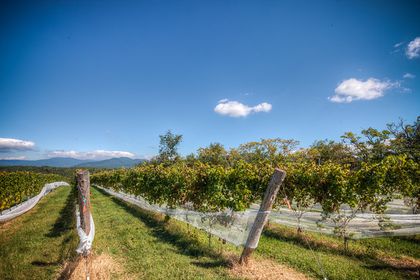 Stinson Vineyards - Harvest HDR
